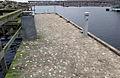 Avföring - Fågelspillning - Ystad-2015.jpg