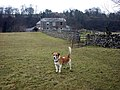 Aysgarth Mill and resident - geograph.org.uk - 1742751.jpg