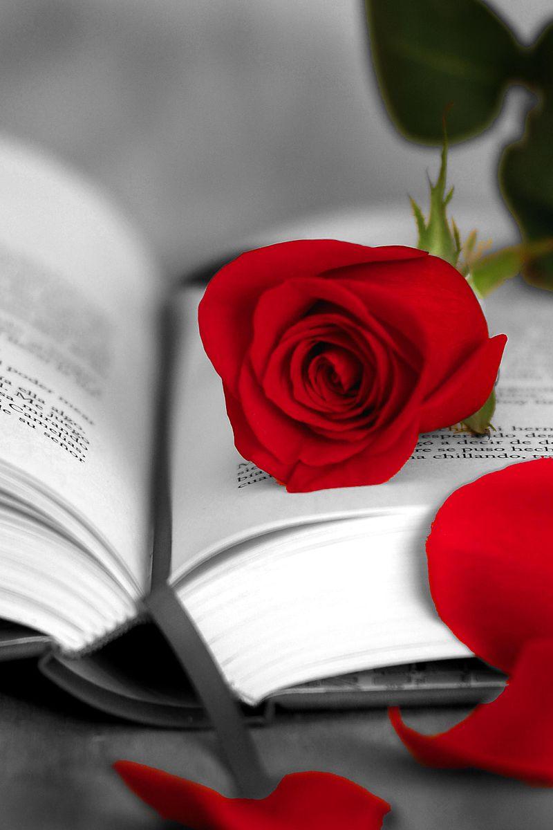 Uma rosa e um livro