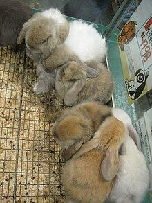 Cinq lapins serrés au fond d'une cage.