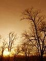Bare trees at sunrise.jpg