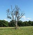 Baum - panoramio - Immanuel Giel.jpg