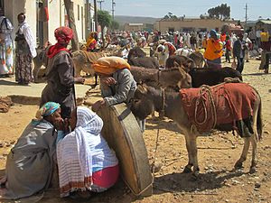 Donkeys in the Dekemhare market