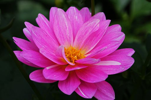 Beautiful-pink-flower - West Virginia - ForestWander