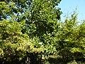 Beglik Tash - surrounding forest - P1020627.JPG