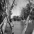 Begroeide oevers van de rivier de Yarkon, Bestanddeelnr 255-4819.jpg