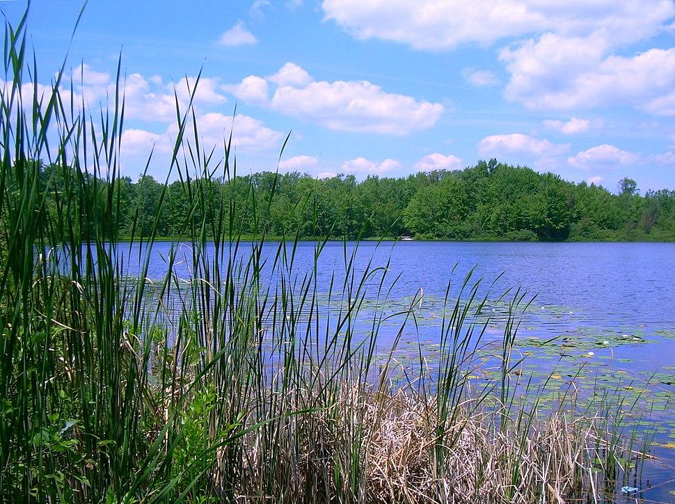Benton Lake Manistee Forest