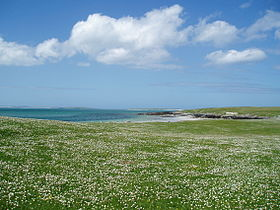 Berneray Machair (hazelisles).jpg