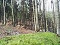 Bielawa, Poland - panoramio (22).jpg