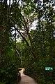 Big Tree - panoramio (7).jpg