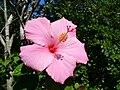 Bigflower5.jpg