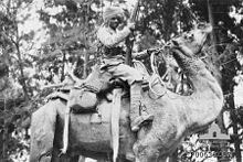 A dark-skinned man wearing a turban is mounted on a camel. He is holding a vertically-aimed rifle in his right hand. Behind his is a background of trees.