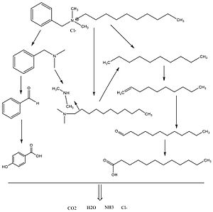 Benzalkonium chloride - Image: Biodegradation pathways of BAC