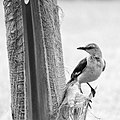 Bird on a tree, black and white (14316584895).jpg