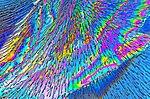 Birefringent Water Ice 5.jpg