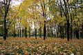 Biryulyovskiy Arboretum 05.jpg
