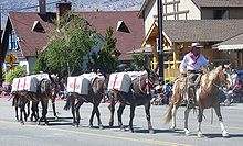 photo of mule pack string in the Bishop Mule Days parade