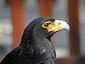 Black Eagle RWD.jpg