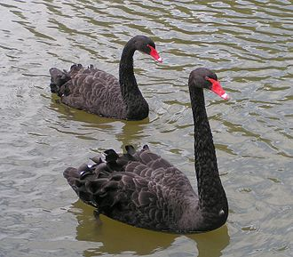 "Falsifiability - This photo corroborates the basic statement ""On this day, there were black swans on this waterway"", which contradicts the law ""All swans are white"", but the contradicting basic statement alone makes the law falsifiable: it  would still be falsifiable, even if there were only white swans."