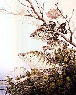 Crappie genus of fishes