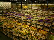 Aalsmeer Flower Auction. The largest commercial building in the world, and a centre of international flower trade.