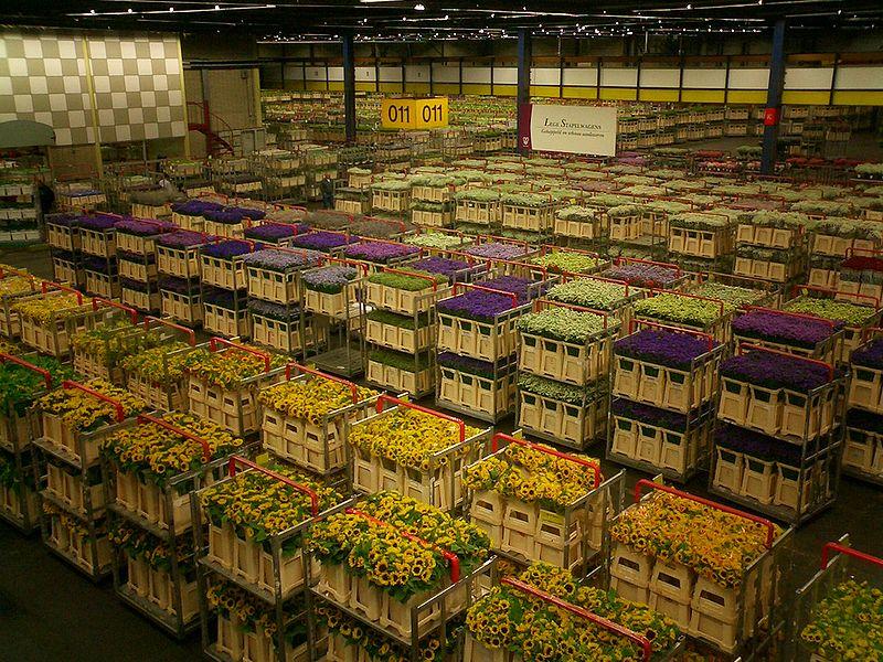 Ежедневно в Аалсмере за четыре часа работы продается 12 млн. срезанных и миллион горшочных цветов
