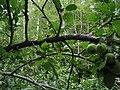 Bloomfield Provincial Park IMG 8252 (1849044430).jpg