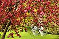 Blossom - Burghley House (16772094193).jpg