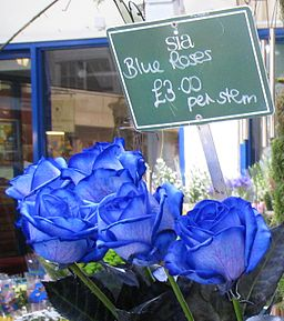 Blue Roses Oxford Market