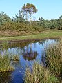 Bog north-east of Yagden Hill - geograph.org.uk - 272481.jpg
