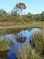 Bog north-east of Yagden Hill - geograph.org.uk - 272481.jpg