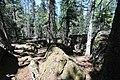 Bonsai Boulders Kananaskis Alberta Canada (26922210815).jpg