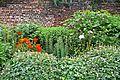 Border, Canal Gardens, Roundhay Park (4712005667).jpg