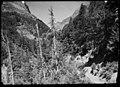 Boscos de la vall d'Ordesa i al fons pic de Tendeñera.jpeg