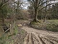 Bratton Clovelly Bridleway 6 - geograph.org.uk - 380563.jpg