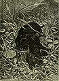 Brehm's Life of animals - a complete natural history for popular home instruction and for the use of schools. Mammalia (1896) (20413435005).jpg