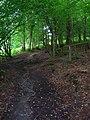 Bridleway and Footpath Junction, Long Wood - geograph.org.uk - 505838.jpg