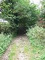 Bridleway to Llyn Cyfynwy - geograph.org.uk - 1511235.jpg