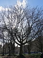 Bristo Square, Edinburgh, Feb 2014 (12776908255).jpg