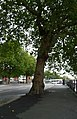 Bristol , Commercial Road, Pavement and Tree - geograph.org.uk - 1524774.jpg