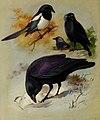 British birds - (19734804373).jpg