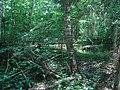 Brocēnu lauku teritorija, Latvia - panoramio (12).jpg