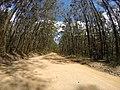Brooman NSW 2538, Australia - panoramio (123).jpg