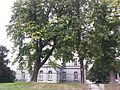Brussels-Paleis der Academiën (2).jpg