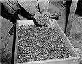 Buchenwald Property 80623.jpg