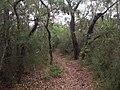 Burgh Track - panoramio (2).jpg