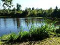 Busserolles étang bord GR4 (3).JPG