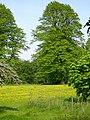 Buttercup meadow - geograph.org.uk - 170711.jpg
