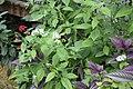 Butterfly Rainforest FMNH 08.jpg