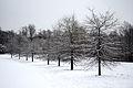 CA winter trees (5352291263).jpg